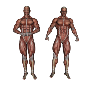 muscle-3120521_1920