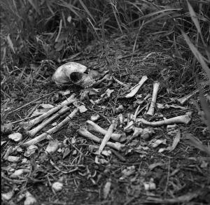 skull-1401665_1920